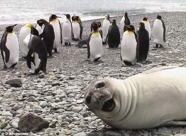 selfie-imgur