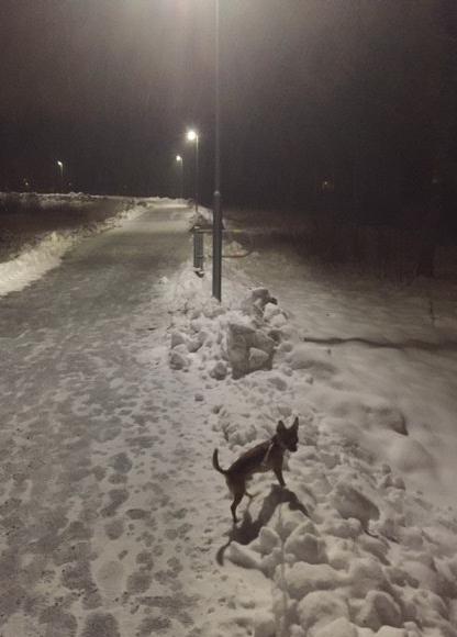 snömoby